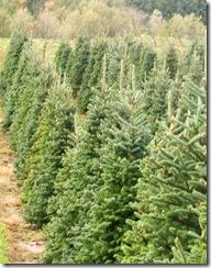Christmas tree farms in hampton roads